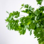 How to prolong the freshness of your fresh herbs