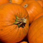 Can you freeze pumpkin?
